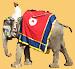 Elefant in Jaipur bei Fort Amber